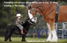 miniature horse quotes | draft horse friend friendship horses mini horse quote cute