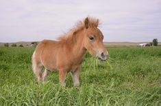 images of miniature horses | ... Photos » Blog Archive » Miniature Horses, Baby Horses, Cute Horses
