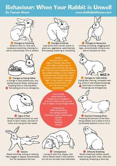 trendy pet bunny care tips house rabbit Pet Bunny Rabbits, Dwarf Bunnies, Meat Rabbits, Raising Rabbits, Rabbit Hide, Rabbit Toys, Bunny Care Tips, Baby Bunnies Care, Rabbit Facts