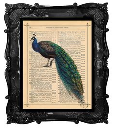 Beautiful PEACOCK Print peacock art print on antique book page dictionary PEACOCK art print