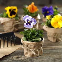 Ładne kwiatki...bratki :)