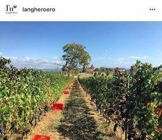 Vineyard, Outdoor, Instagram, Outdoors, Vine Yard, Vineyard Vines, Outdoor Games, The Great Outdoors
