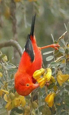 Resultado de imagem para different color of birds