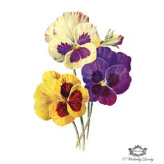 Vintage Pansy temporaray tattoo, Pansy tattoo, Vintage tattoo, Body Art, Wickedly Lovely Skin Art Temporary Tattoo