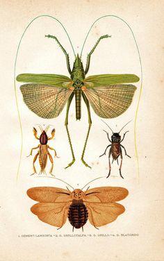Scientific Illustration | thinkingdifferent: Terrific vintage...