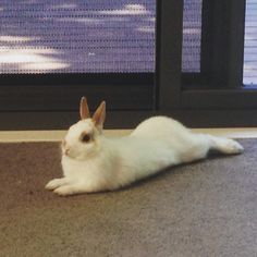 Netherland dwarf and cutest pet ever, Twitchy, our rabbit.