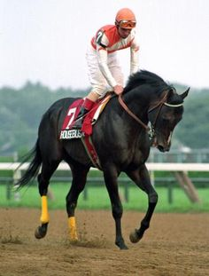Decimating His Competition By Wide Margins Became Housebusters Calling Card Total Purse Of 3 Years Racing Was 1229696
