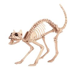 Cat Skeleton Halloween Decoration Haunted House Prop Outdoor Indoor Spooky Decor…