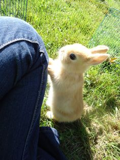 """Baby bunny. Excuse me while I go die of cuteness. """"that's the cutest animal in the world"""" seth guthrie"""