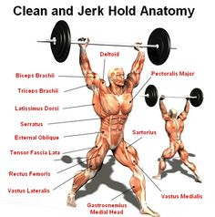 A diagram showing the muscles recruited during the clean & jerk. Olympic #weightlifting is truly full-body exercise! #calstrength #getitright