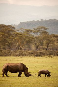 Lake Nakuru Rhinoceros.  Dangerous to mess with this guys kid.