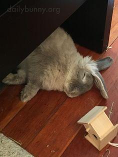 Shh! Don't disturb bunny! - June 25, 2016