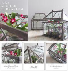 Ellen Arched Terrarium