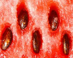 Extreme close-up: Inside 11 fruits and veggies Micro Photography, Fruit Photography, Texture Photography, Close Up Photography, Creative Photography, Photography Ideas, Close Up Art, Close Up Photos, Organic Structure