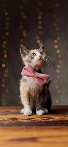 Cats And Kittens, Batman, Pink, Animals, Beautiful, Wallpapers, Cute Kittens, Gatos, Animales