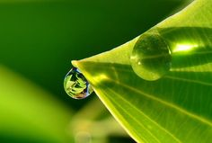 A single dew drop hangs from a Hosta Leaf ... what an incredible image of something so tiny!    iWitness Weather Contributor: Linda Othersen