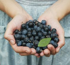 #Терн  #blackthorn #trevel #ukraine #nature #folklife #forest #украина #berries