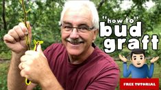 This weeks lesson is BUD GRAFTING or T-BUDDING. Late summer is the best time to start bud grafting. Growing Fruit Trees, Plant Growth, New Growth, Apple Tree, Late Summer, Permaculture, Step Guide, Bud, Forests