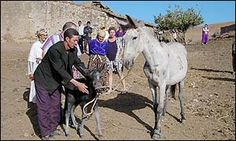 Morocco.There have only been  substantiated cases of a mule giving birth in the past quarter century: one in China in 1988 and the other also in Morocco in 1984, October 2002 ,Collbran USA 2007