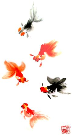 Goldfish Estampa Japón