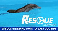 You learned Hope Dolphin's story in Dolphin Tale 2, now see her actual rescue footage & learn what it takes to rehabilitate an orphaned baby dolphin. Here is Rescue-Clearwater, Episode 6: Finding Hope!