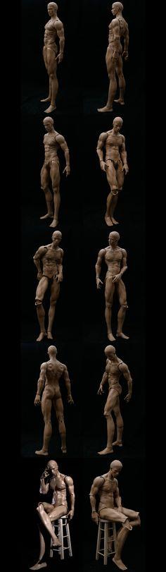 Male Body Evol