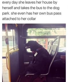 Why does she have to?  The owner should take her to make sure she doesn't get hurt