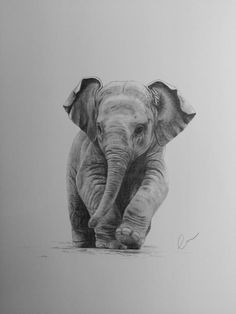 42 Simple And Easy Pencil Drawings Of Animals - Buzz Hippy Easy Pencil Drawings, Realistic Animal Drawings, Pencil Drawings Of Animals, Animal Sketches, Cute Drawings, Drawings Of Elephants, Realistic Elephant Tattoo, Baby Elephant Drawing, Elephant Sketch