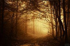 Puslu bir karanlık büyülü orman HQ duvar kağıdı