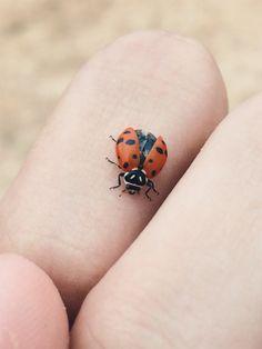 #nature #vscox #wethecreators #brasil #ladybug 🐞