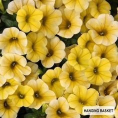 PlantShed.com | Petunias   Hanging Basket | Garden Supply Delivery NYC |  Gardening Ideas | Pinterest | Gardens, Garden Supplies And Nyc