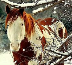 Bello <3 To me this horse looks like a Justice. <3