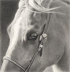 Mary Ross Buchholz - pencil drawing of palomino horse Pencil Drawings Of Animals, Horse Drawings, Art Drawings, Cowboy Horse, Cowboy Art, Horse Artwork, Amazing Drawings, Pencil Drawing Tutorials, Color Pencil Art