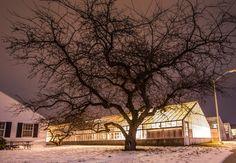 Greenhouses in winter at Michigan State University, East Lansing, MI