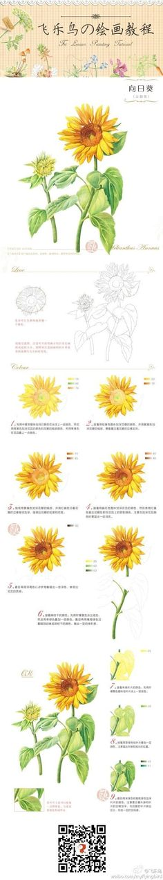 How to draw and paint a Sunflower