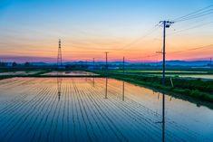 水田の朝焼け   自然・風景 > 大地の写真   GANREF