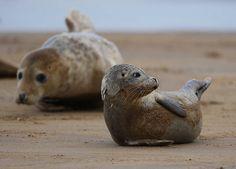 super cute seals