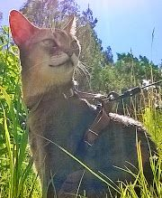 Cat enjoying the Summer