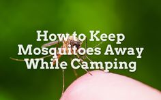 We take a look at the best methods of keeping mosquitoes away while camping. Keeping Mosquitos Away, West Coast Scotland, Mosquitoes, Camping, Good Things, Campsite, Campers, Tent Camping, Keep Mosquitoes Away