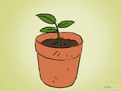 Grow an Apple Tree from a Seed Step 9 Version 2.jpg