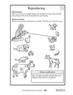 1st grade, 2nd grade, Kindergarten Science Worksheets