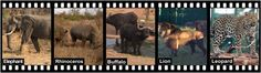 Part 3 of The Big 5 What leopards would like to say! Big 5, Rhinoceros, Leopards, Mystery, Wildlife, Elephant, Articles, Sayings, Tv