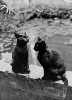 These two black cats from New Orleans, 1920 | 20 Lovely Cat Photos From The '20s