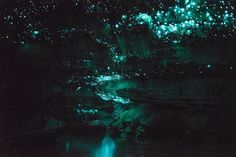 The Waitomo Glowworm Caves are a must see on any trip to New Zealand. I can honestly say that I have never had another experience even come close to what this tour was like! Click through to read more on the Glow Worm Caves in New Zealand!