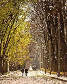 На границе осени и зимы.Фото Rus_tatiana.