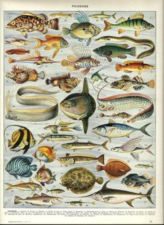 FISHES Vintage ANIMAL poster French Dictionary by FolieduJour