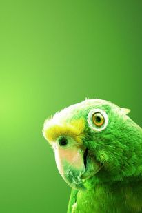 green parrot by mariana leon Green Life, Go Green, Green And Orange, Shades Of Green, Green Colors, Pretty Green, Yellow, Green Eyes, World Of Color