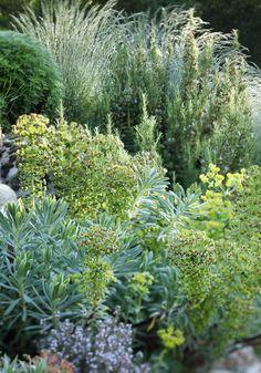 Euphorbia - romarin - thym