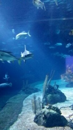 1000 Images About Henry Doorly Zoo Omaha Nebr On