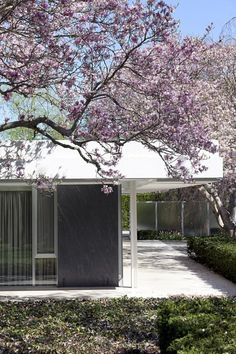 repinned for three reasons: the white, the dark, and color + shape of the tree. / Eero Saarinen: Miller Residence
